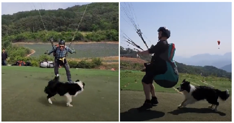 This border collie gets so excited, it turns into a canine tornado