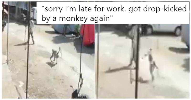 This clip of a man being drop-kicked by a monkey is 15 seconds of infantile delight