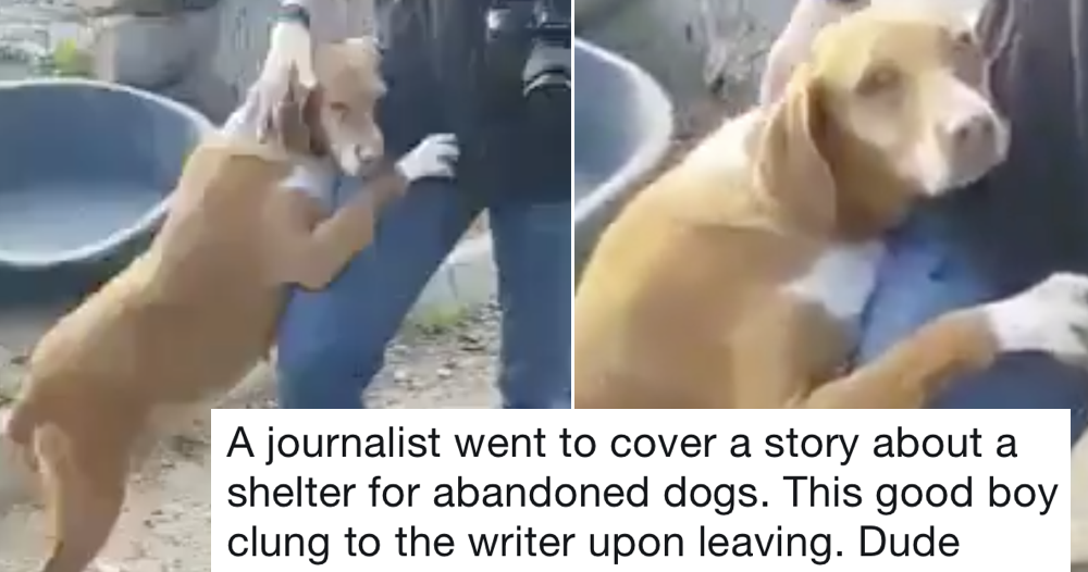 This guy unexpectedly came home from work with a dog and it will give you feelings