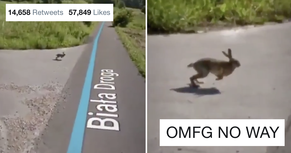 What happens next with this rabbit spotted on Google Maps is very funny but suffers a fatal flaw