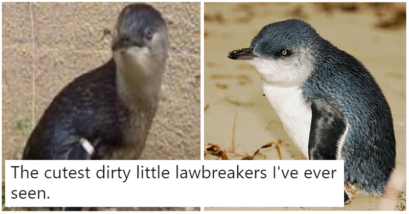Two penguins walk into a bar: a sushi bar – our 7 favourite comments