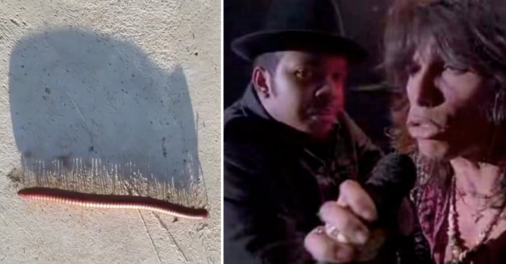 Run DMC ft Aerosmith added to this video of a shadow of a millipede walking is today's favourite thing