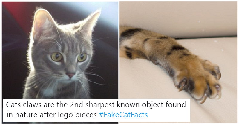 funny fake cat facts  celebrate international cat day  poke
