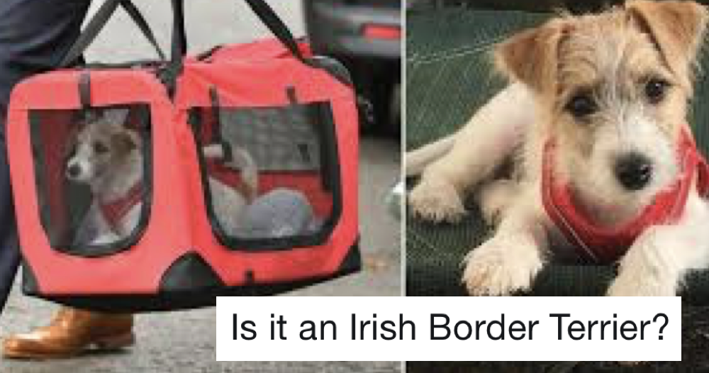 Favourite 23 things people are saying about Downing Street's new dog