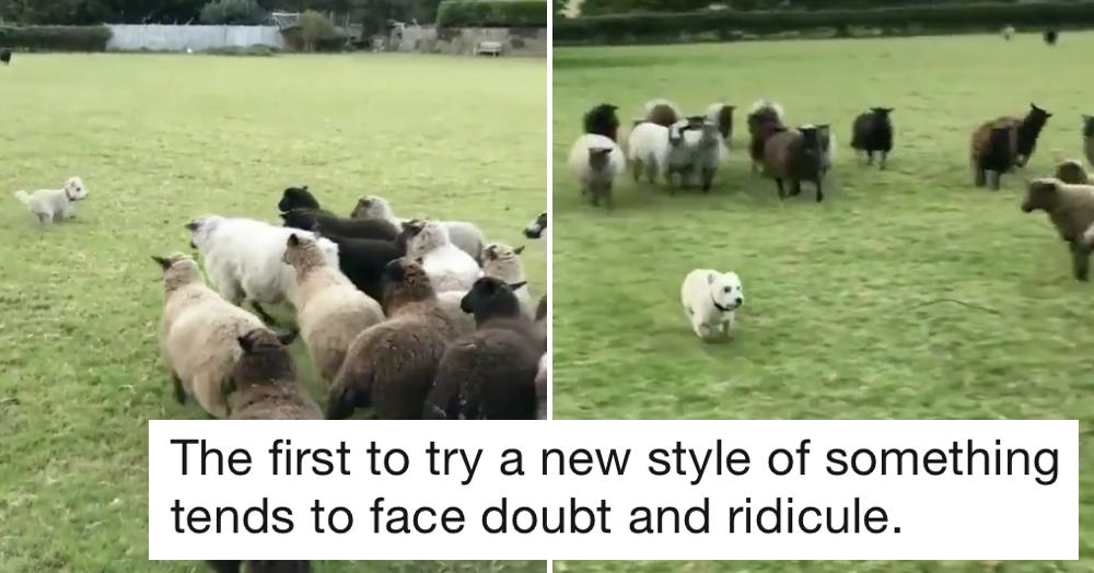 World's Worst Sheepdog