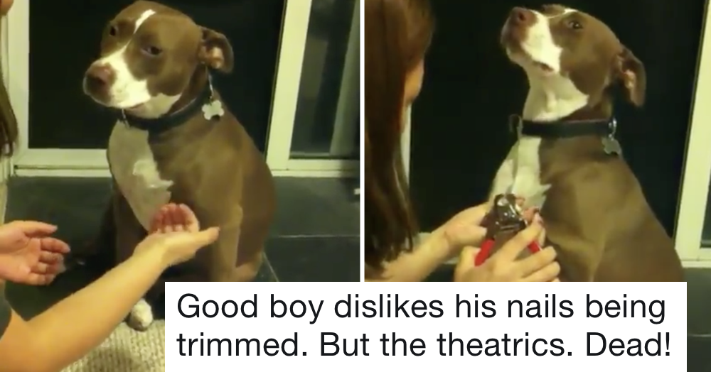 This over-acting dog's reaction to getting its nails clipped is this week's funniest thing