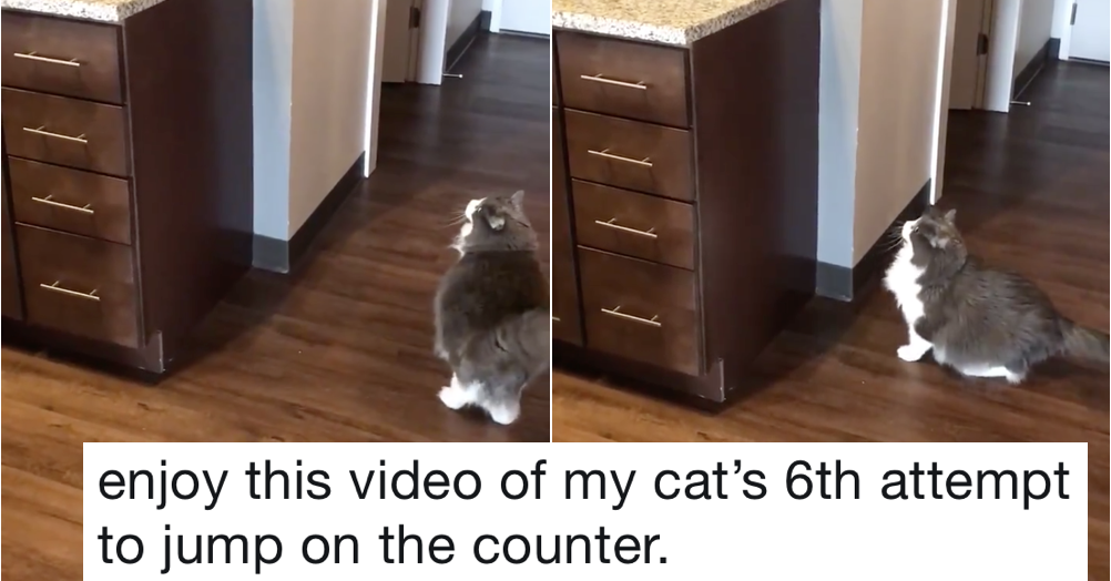 This cat trying to jump onto the counter is here to make your day better