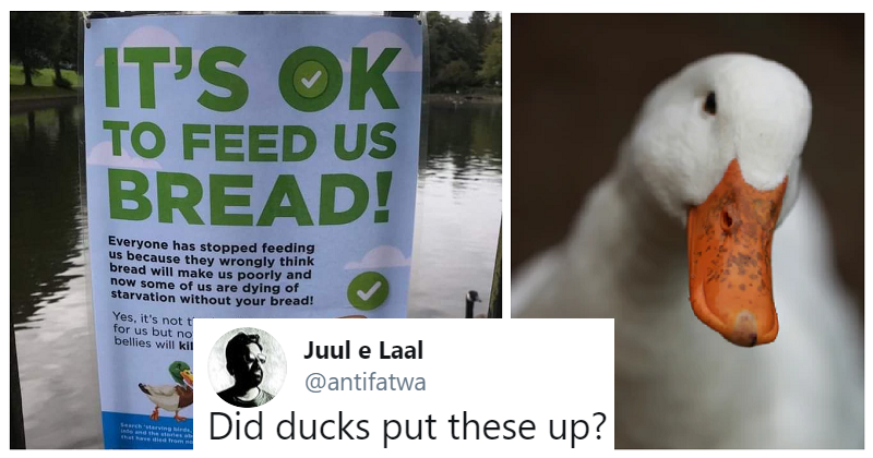 Our 25 favourite funny things from this week