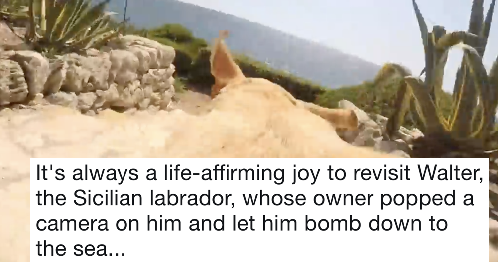 The dog's eye view of this Labrador's 35-second race to the sea is one helluva ride