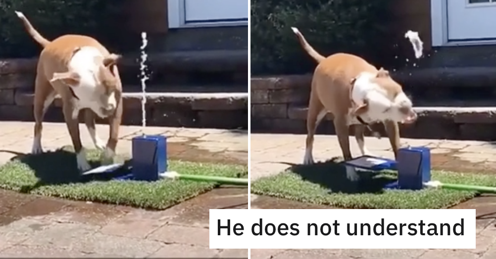 Funny dog video of the week