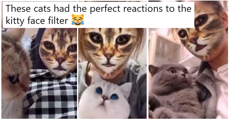 Cats seeing their humans use kitty face filters is our new favourite thing