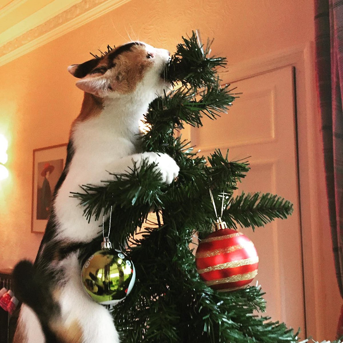 Susan Calman Shared Her Cats In Christmas Trees Pics And