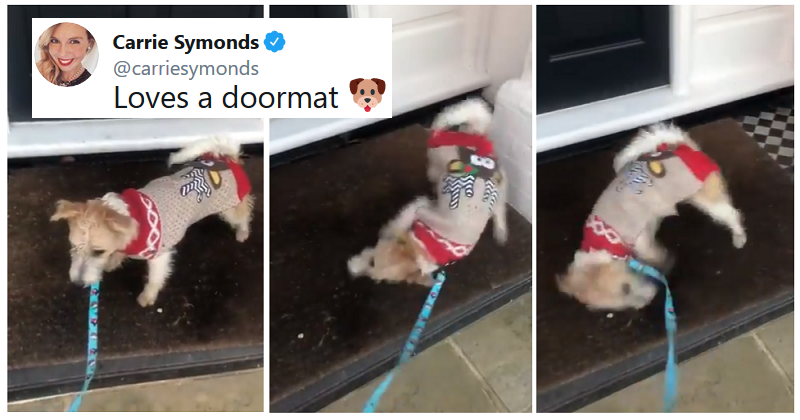 These 4 scathing replies to Carrie Symonds' tweet about Boris Johnson's dog were a bit ruff