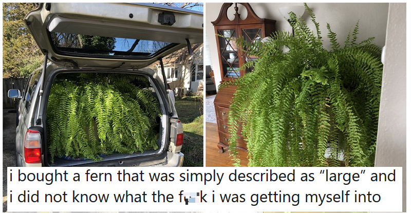 "The size of this ""large"" fern is a hilarious reminder to ask for proper size details"