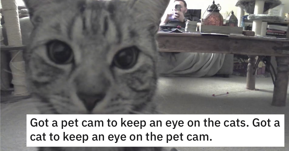 This cat keeping an eye on the pet cam is a very funny watch