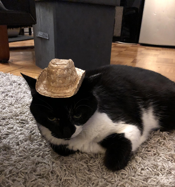 Someone gave a kippah to a cat and the comments were purrfectly cringeworthy