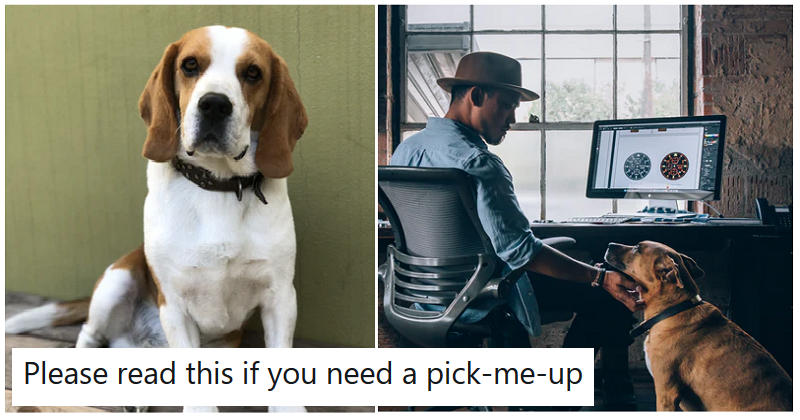The payoff to this story of a mix-up between an office and doggy daycare gets 10/10