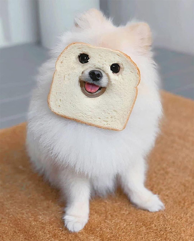 bread dogs masks face floof wearing monday purebread wishes dog smile put pets nothing imgur don story eyebleach