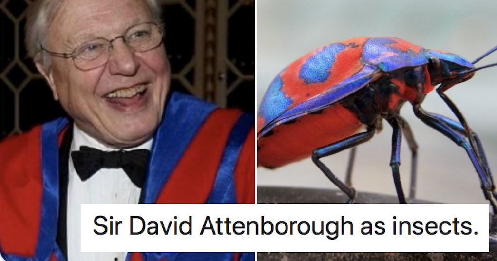This thread of 'David Attenborough as insects' is a wonder of the natural world - the poke