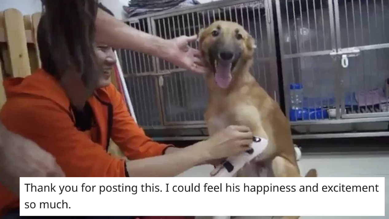 The joy of this dog after it has its prosthetic legs fitted is the content we needed right now