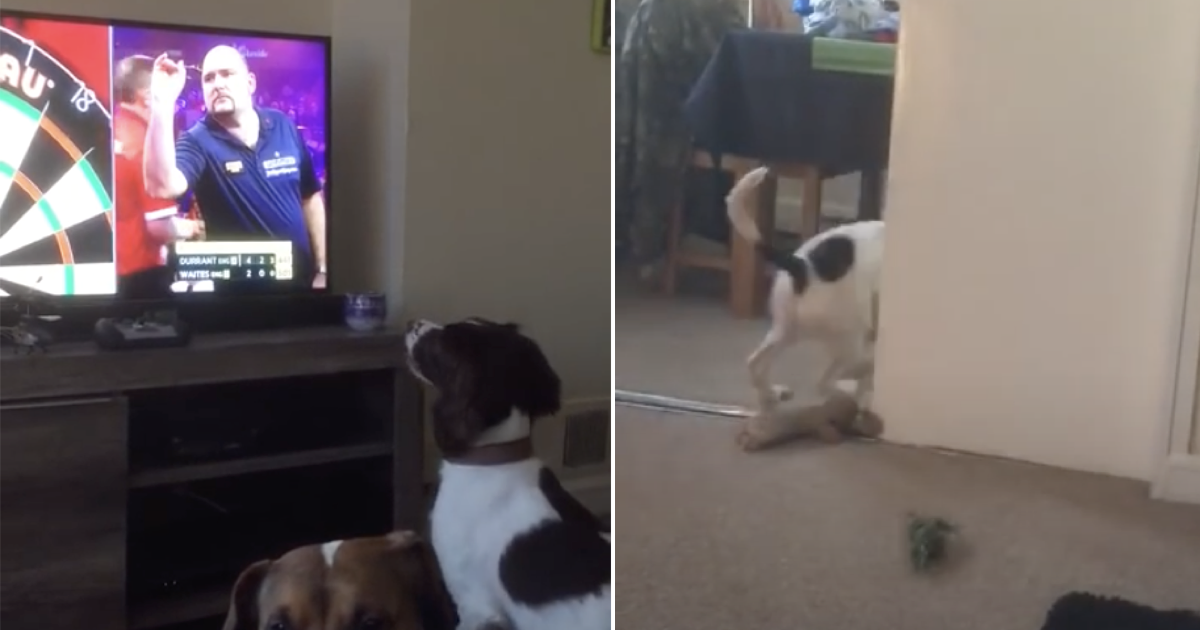 We'll never tire of this clip of a dog playing 'fetch' with the darts players on TV