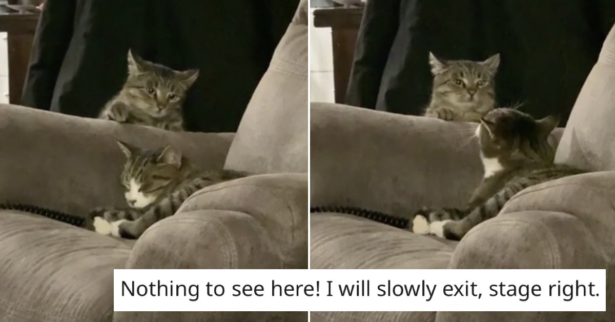 This sneaky cat failed at being sneaky and it's a slow motion delight - the poke