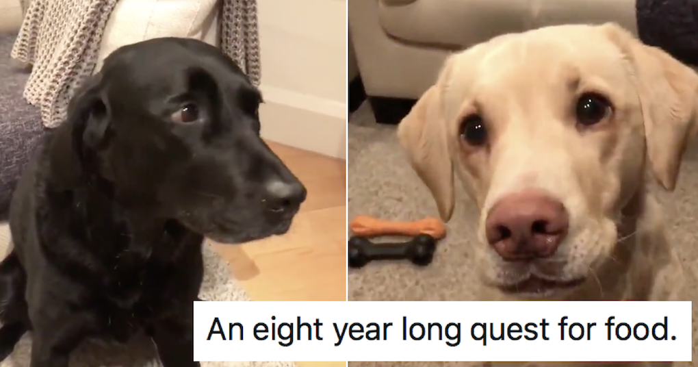 Andrew Cotter's done another video with Olive and Mabel and everyone's day just got a bit better