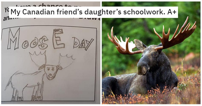 This Canadian schoolkid gets 10/10 for their argument for Moose Day