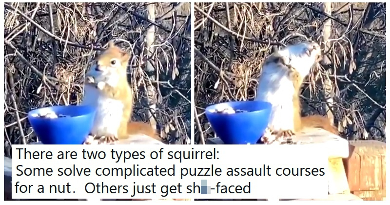 """""""Everyone needs to see this squirrel that's off its tits drunk on fermented pears"""" - the poke"""