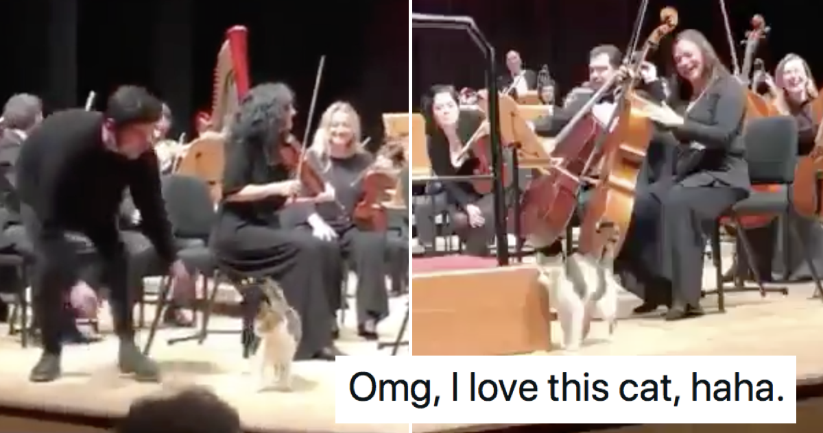This exceptionally curious cat wouldn't leave the orchestra alone and it's just brilliant - the poke