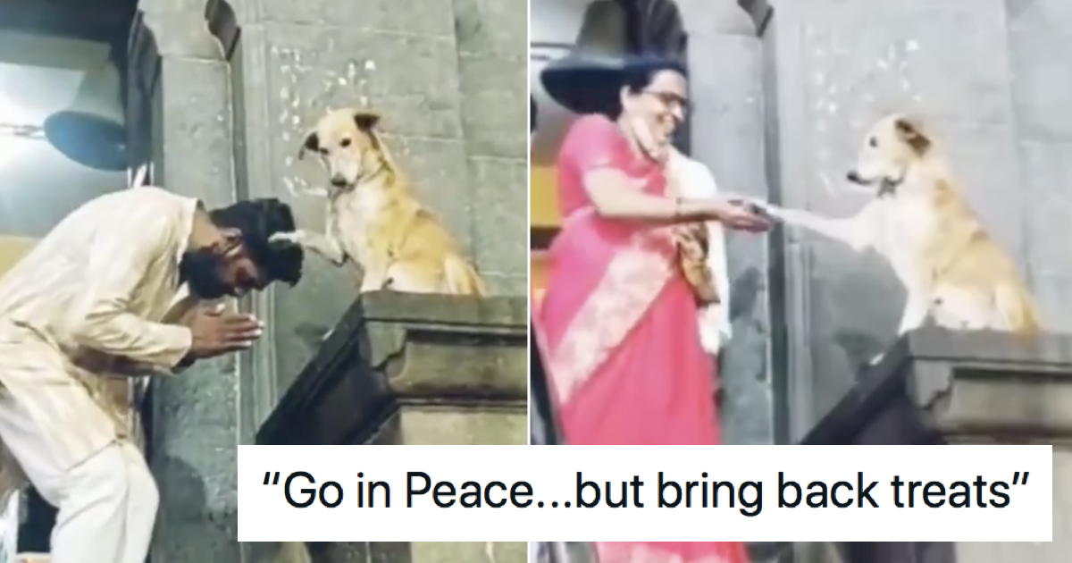 This stray dog greeting people as they leave a temple is such a lovely watch