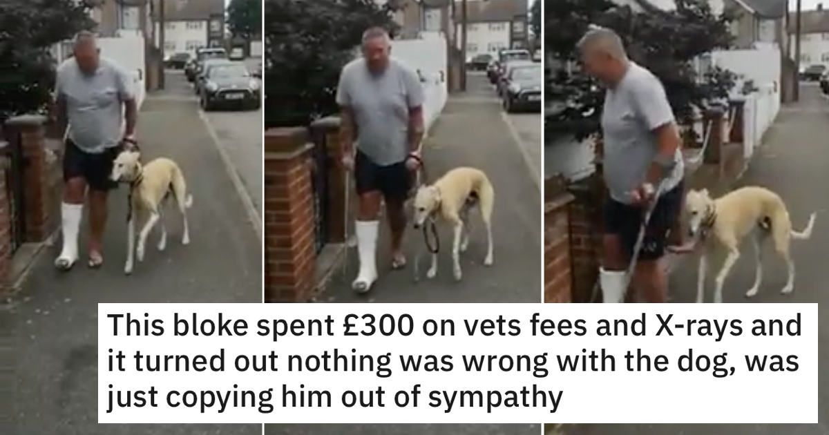 People love this tale of a sympathetic dog and his very out of pocket owner - the poke