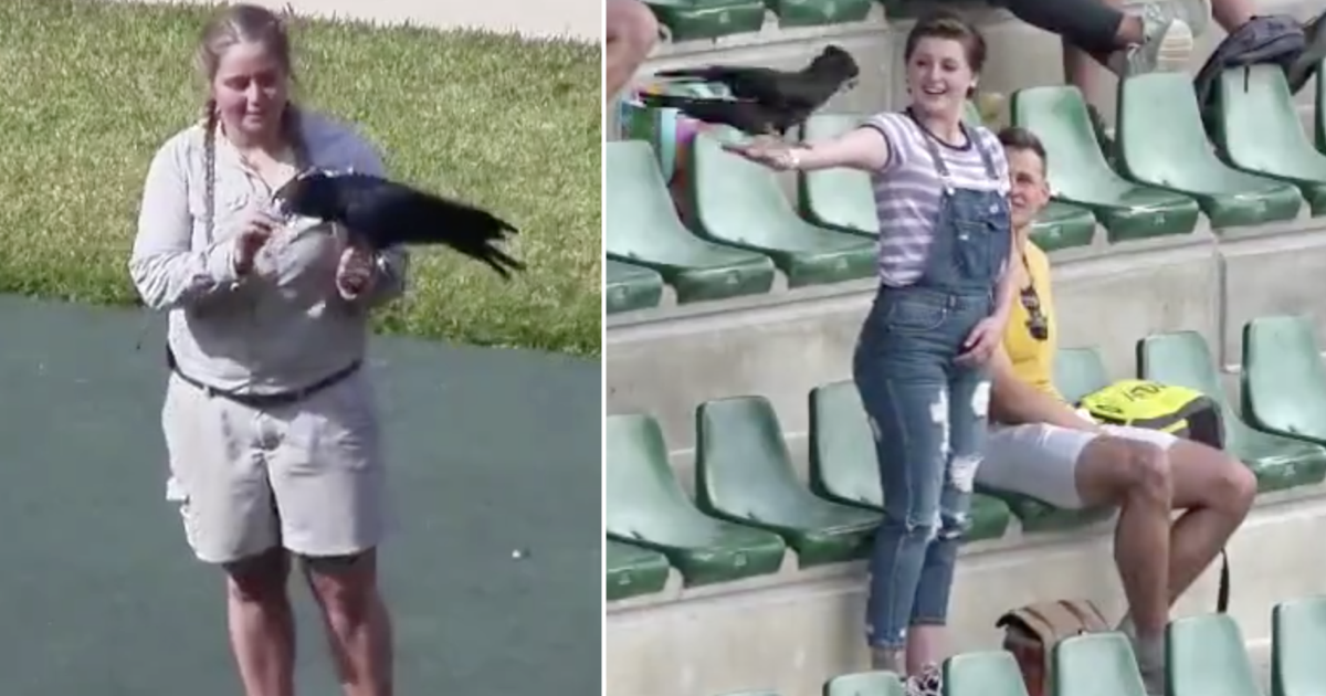 The unexpected twist in this zoo's bird show stunt is making everyone's day better - the poke