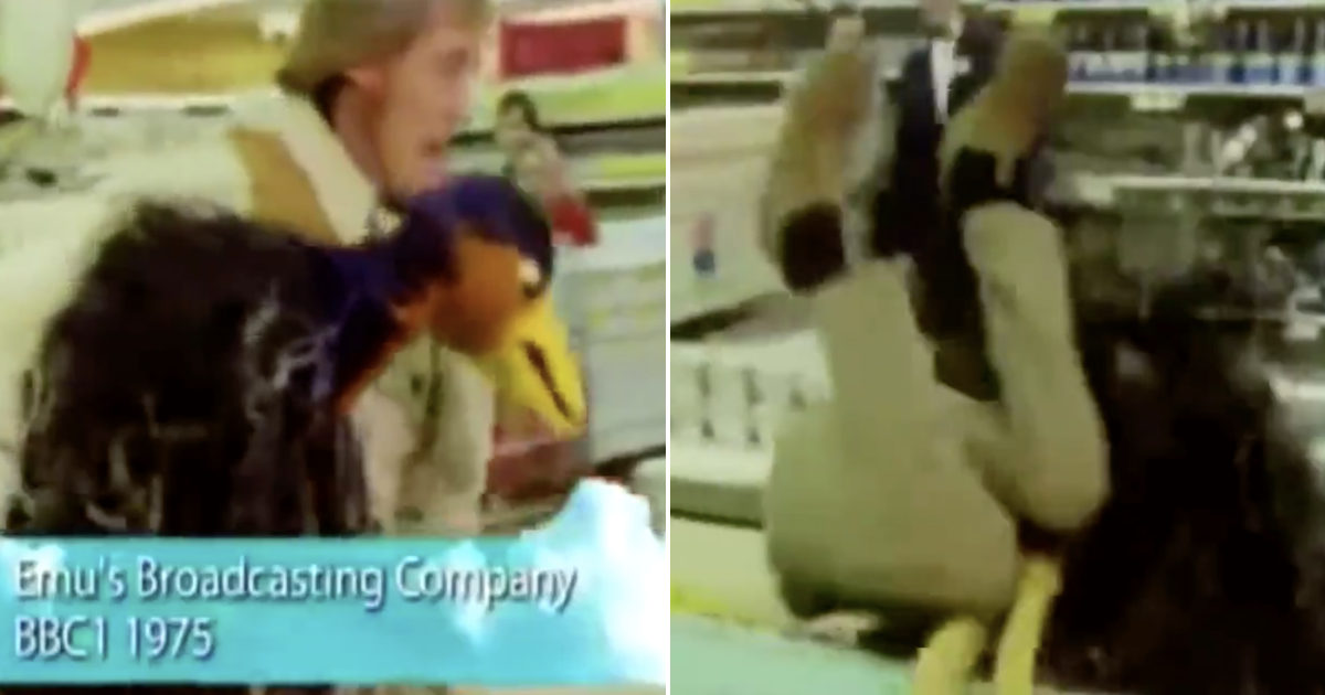'Nothing will top the pure comedy genius of Emu pulling Rod Hull into a freezer' - the poke