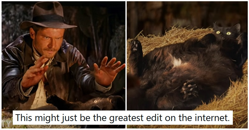 This brilliant Indiana Jones parody nails every cat owner's dilemma
