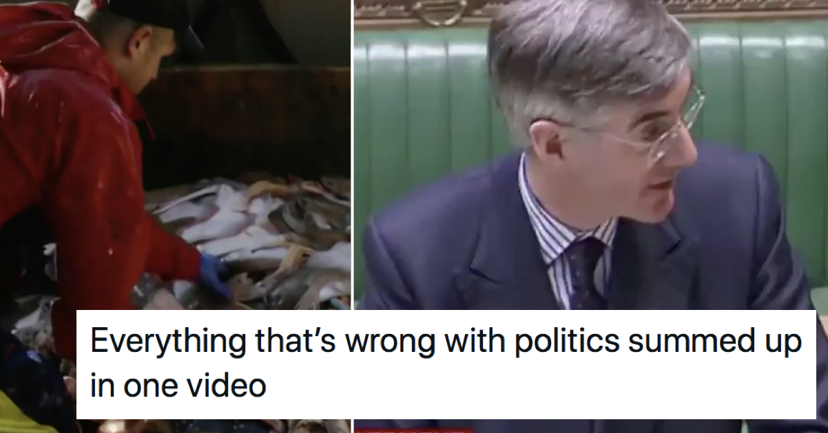 Jacob Rees-Mogg said fish were now 'British and happier for it' – only 7 responses you need - the poke
