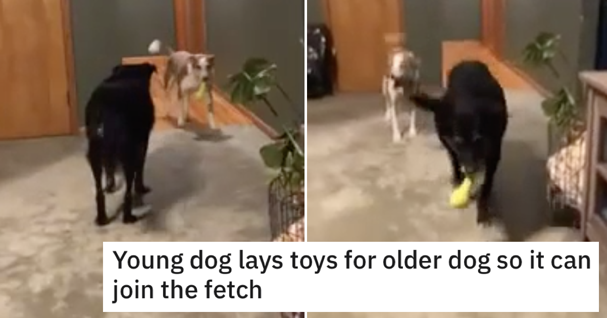 This young dog helping an older dog play fetch wins 'awww!' of the day - the poke