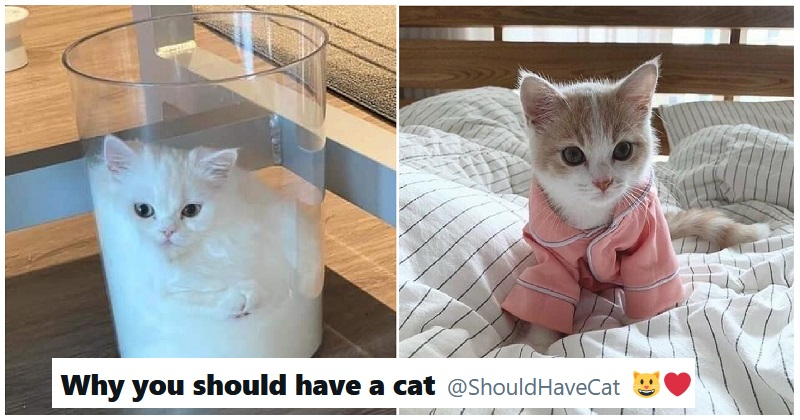 The 'Why you should have a cat' Twitter account is the stress buster we all need – 10 favourites - the poke