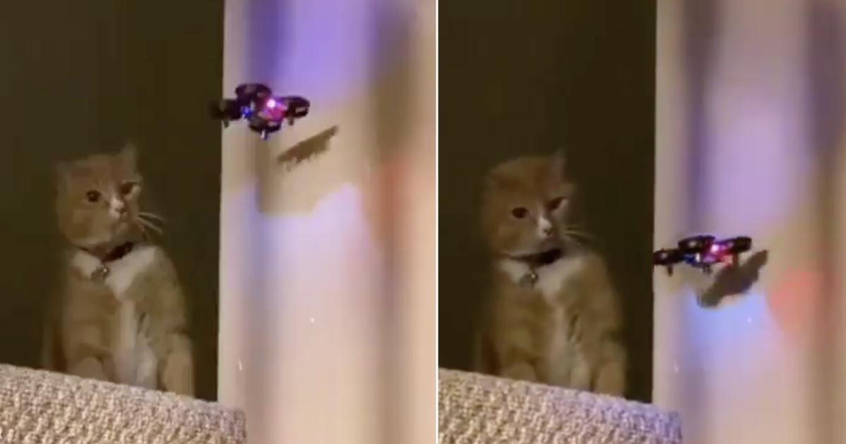 This cat's not taking any nonsense from this drone and it's five seconds very well spent - the poke
