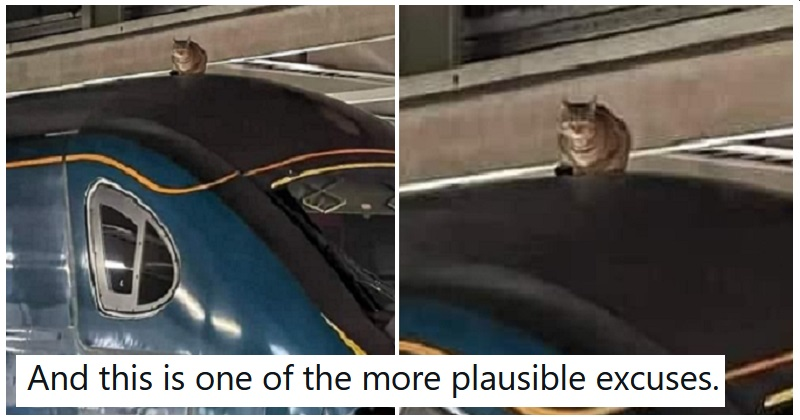 'There's a cat on the train' is the new 'there are leaves on the track' - the poke