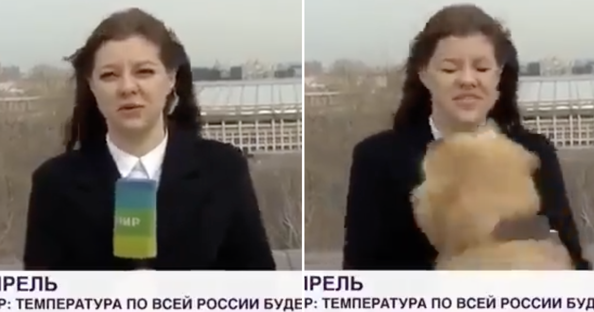 A dog nicked this reporter's microphone live on air and went viral because, well, watch
