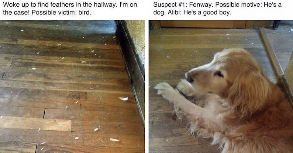 'Woke up to find feathers in the hallway' – a very funny investigation in 7 parts - the poke