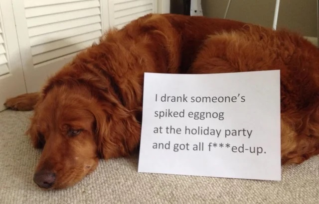 A hilarious rogues' gallery of 18 dogs being publicly shamed