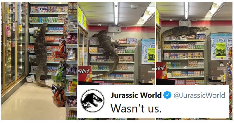 Our 15+ favourite reactions to the giant lizard that ran amok in a Thai shop