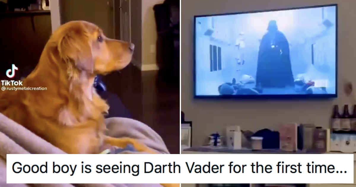 Mark Hamill had the best response to this dog terrified by Darth Vader