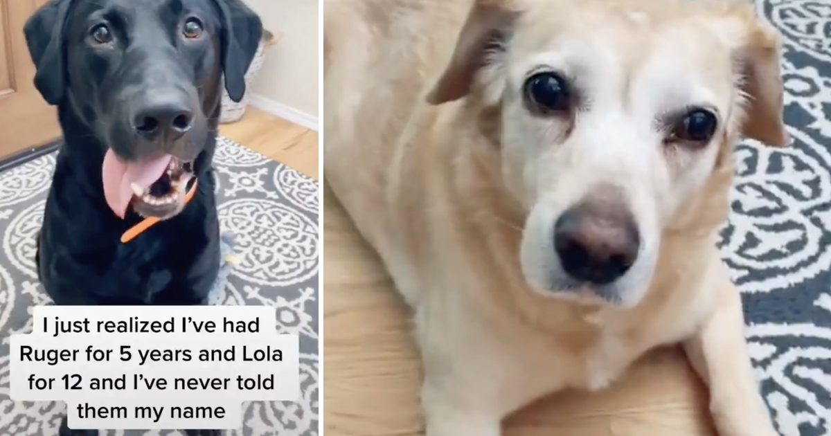 These dogs' response to being told their owner's name is perfect comedy timing