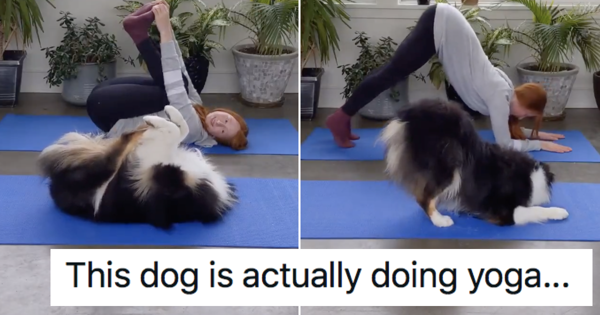 This dog doing yoga went wildly viral because, well, watch