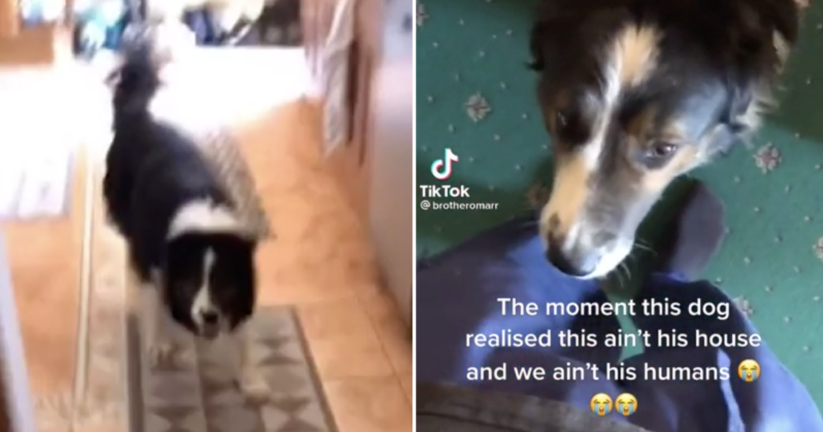 This dog's sudden realisation it's in the wrong house is funny and entirely relatable