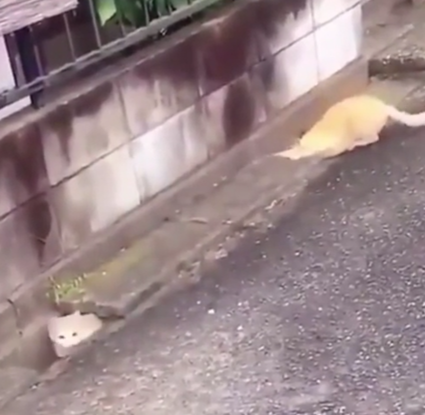 This hilarious cat chase is 8 seconds very well spent