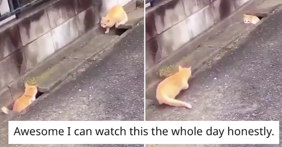 This hilarious cat chase is 8 seconds very well spent - the poke
